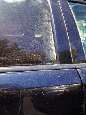 Pollen Window