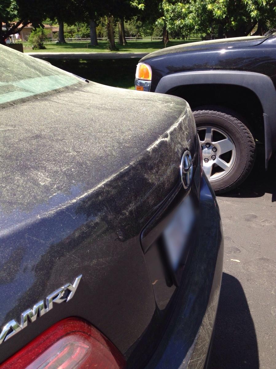 Pollen Car
